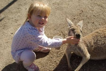 Child-feeding-kangaroo