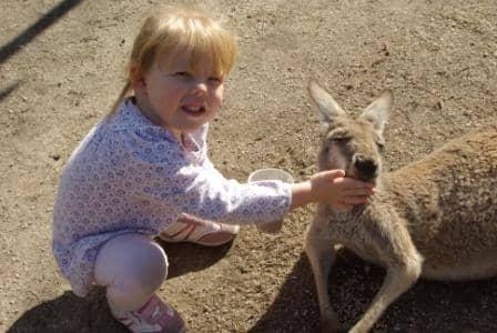 Child-feeding-kangaroo