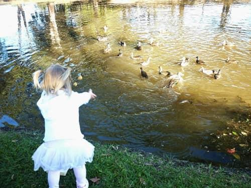 duck food kids