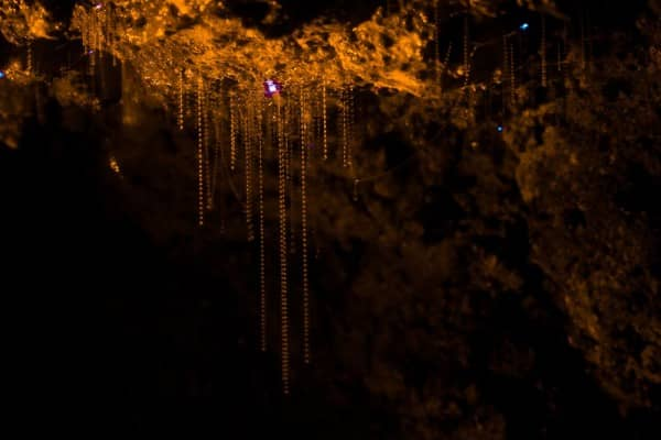 Visiting a Glow Worm Cave with Kids