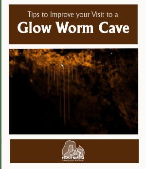 Glow worm visit Activities