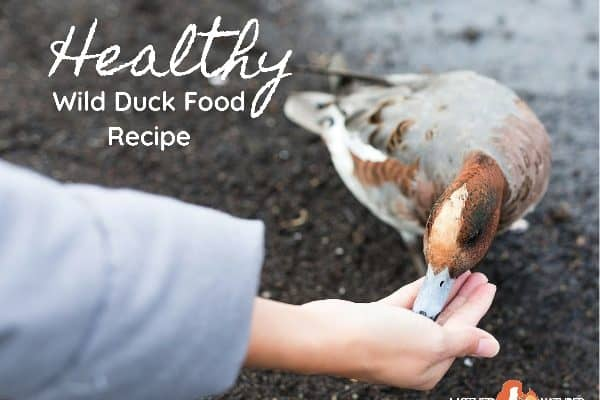 Ditch the Bread and make Wild Duck Food Instead!