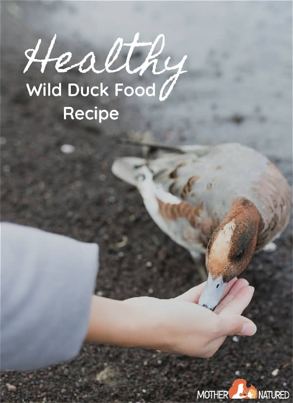 Healthy Wild duck food recipe