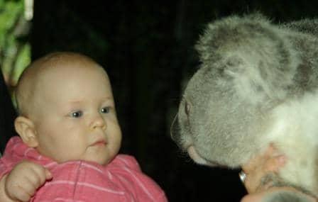 baby-and-koala