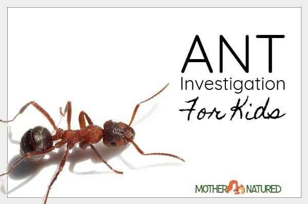 A Simple Ant Experiment for Kids