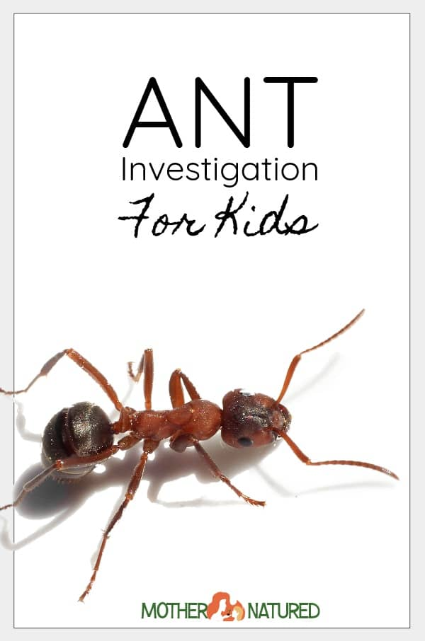 Ant Experiment for Kids