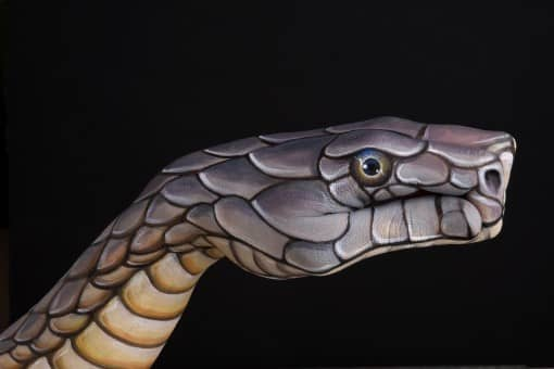 Cobra-on-black1-guido-daniele