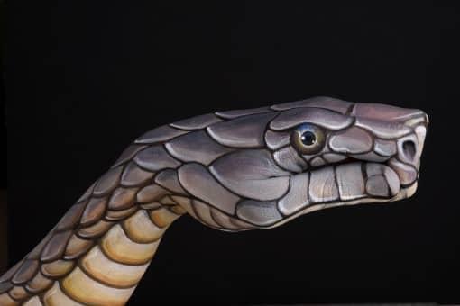 Cobra-on-black1-guido-daniele