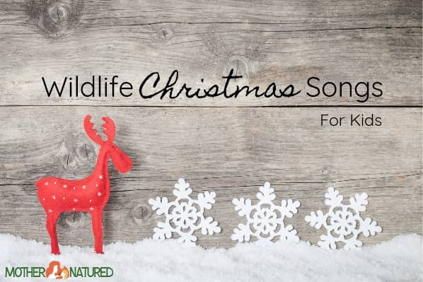 Top Five Wildlife Christmas Songs for Kids