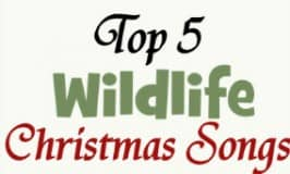 Top five wildlife Christmas songs