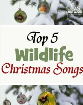 Wildlife Christmas Songs