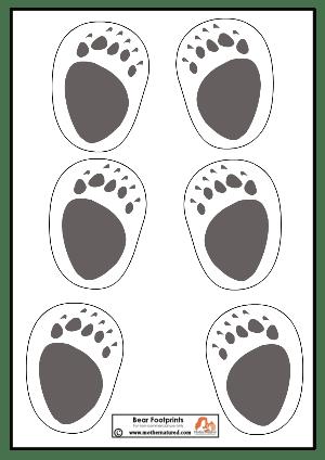 Bear Footprints