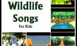 Top wildlife songs for children