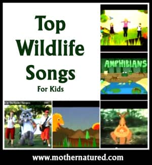 Wildlife Songs