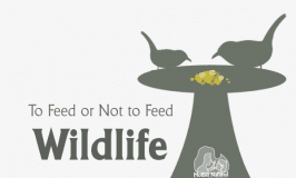 Why shouldn't we feed wildlife?