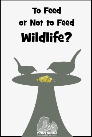 Should you feed wildlife?