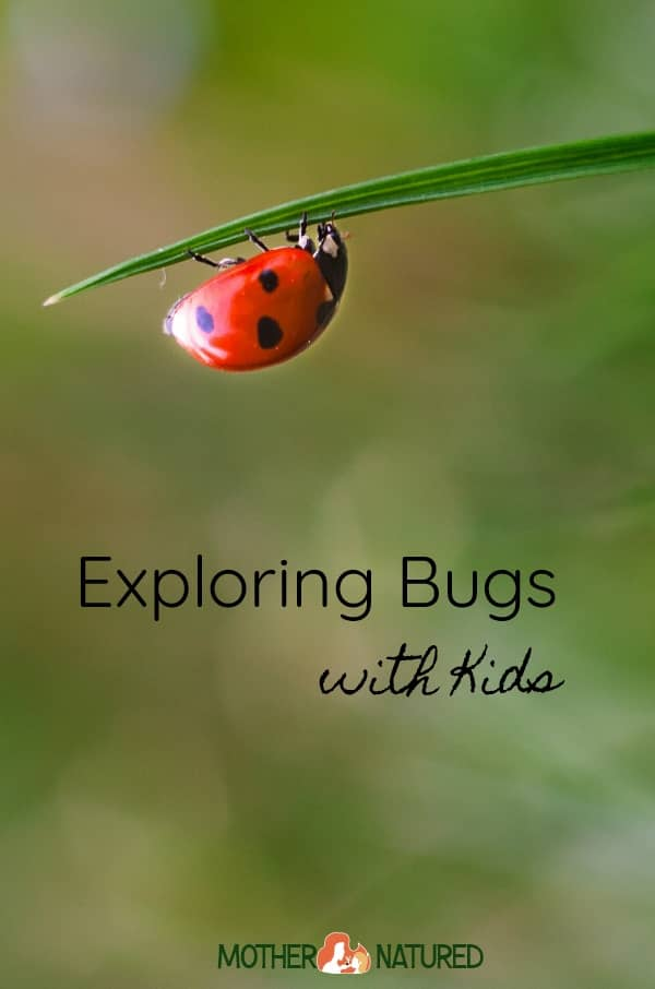 Exploring Bugs with Kids