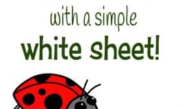 Exploring bugs with a simple white sheet