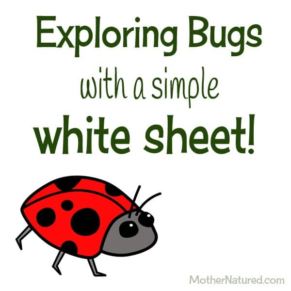 Exploring bugs with a white sheet