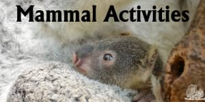 Mammal Activities for Kids