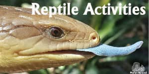 Reptile Activities for kids