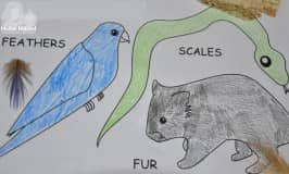 Fur, feather and scales Activity