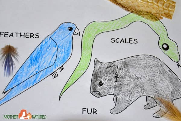 Fur Feathers and Scales Activities for Kids