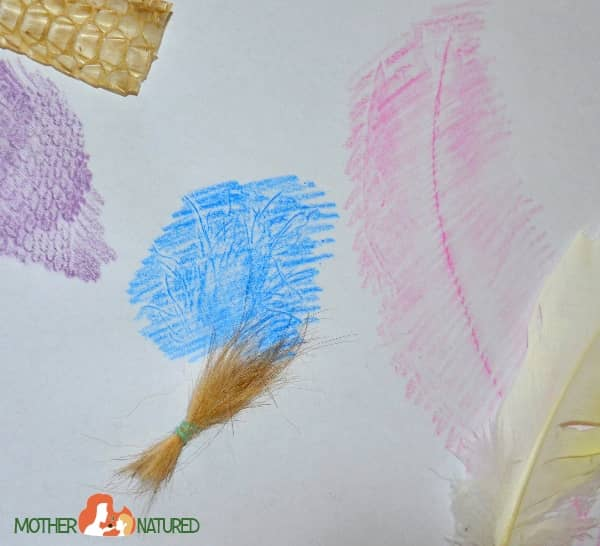 Fur feather and scale rubbings