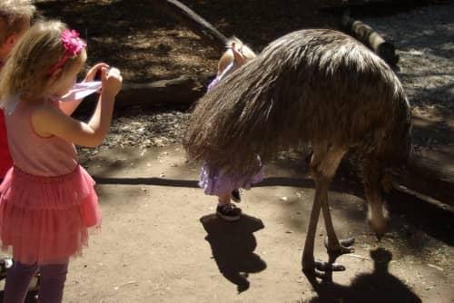 zoo activities