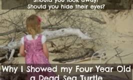 Why I let my four year old see a dead sea turtle