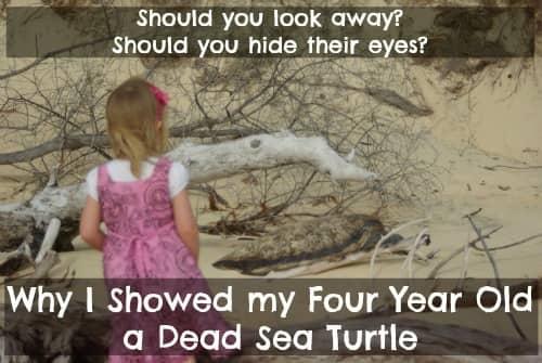turtle conservation kids