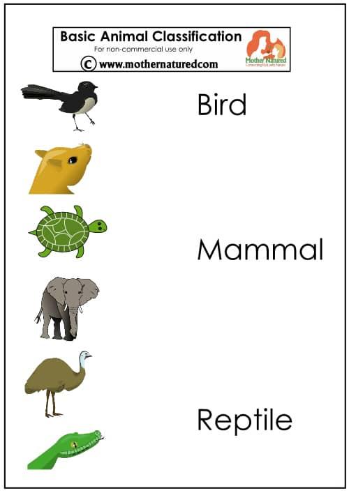 reptile worksheets