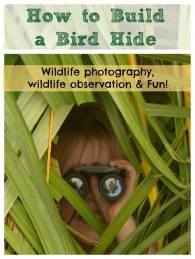 How to build a bird Hide