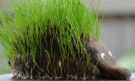 How to make an animal grass head