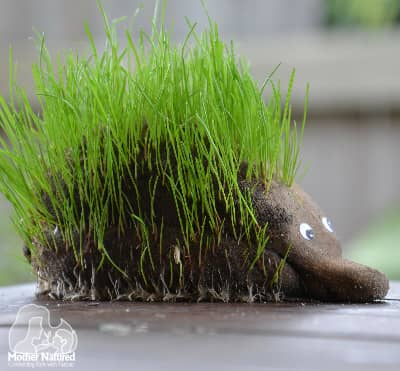 How to make an animal grass head