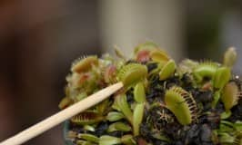 Exploring predator plants