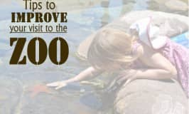 Ten tips to improve your visit to the zoo