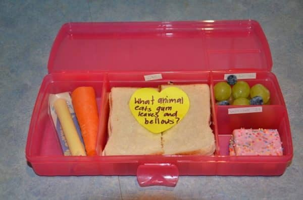 Animal Lunch Box Quiz that will Delight your Child
