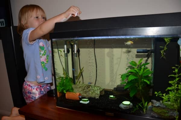 Why Should You Let Your Child Have A Pet Fish