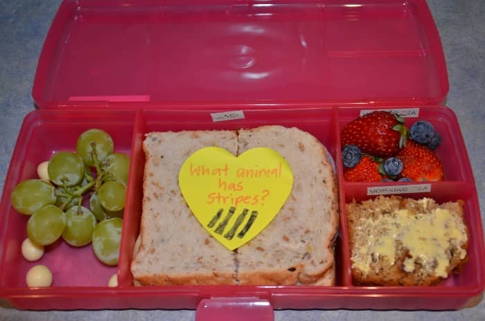 animal school lunch box