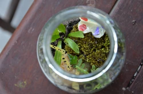 Wildlife themed terrarium for kids