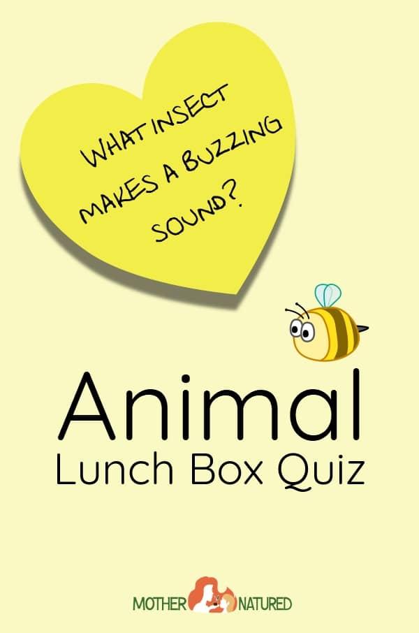 Animal Lunch Box Quiz