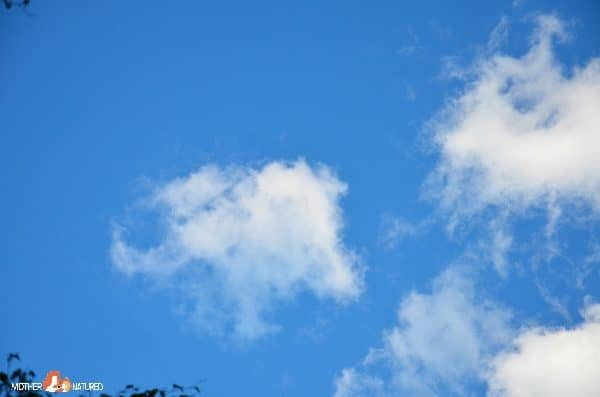 Cloud watching: Finding Animal Cloud Shapes with Kids