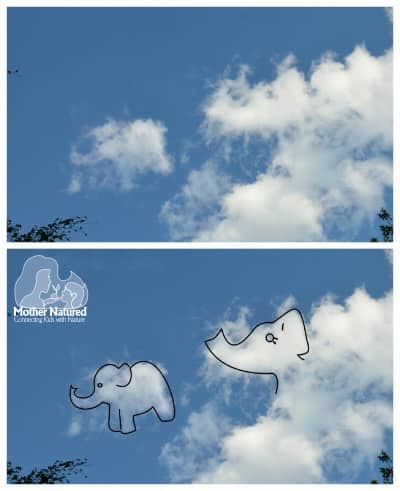 Elephants-in-the-clouds
