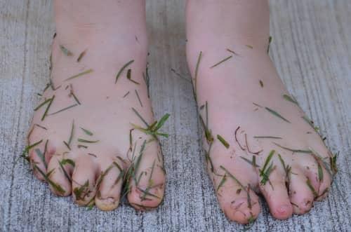 dewy grass faun