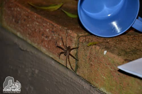 Spiders in your home