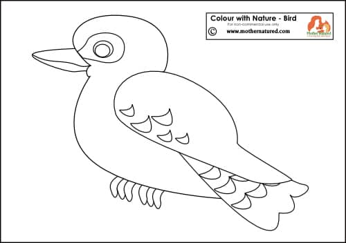 Colouring Pages Kookaburra : Kookaburra tracing page all 2016 eurovision song contest