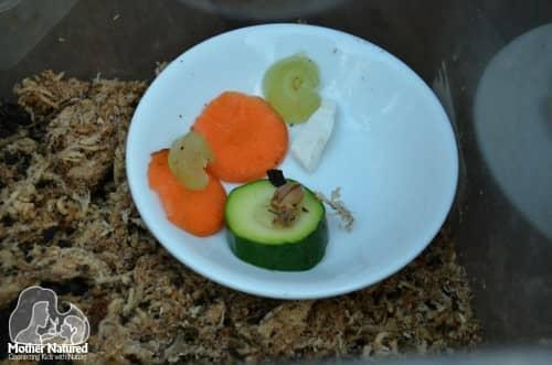 Snail food