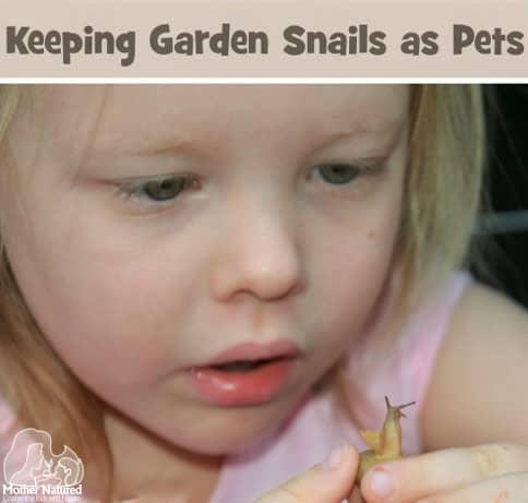 Keeping Garden Snails as Pets