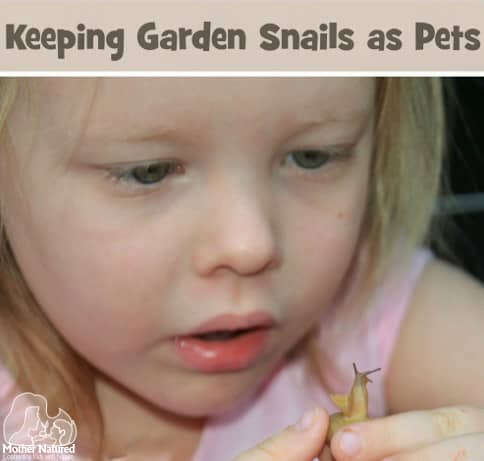 Keeping Garden Snails as Pets
